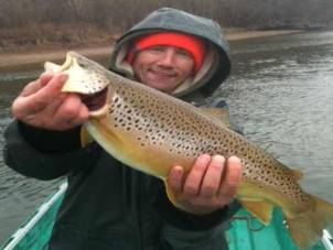 Nice brown trout - cotter Trout Dock.
