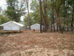 Tents at Cotter Trout Dock's island campground-White River-Arkansas